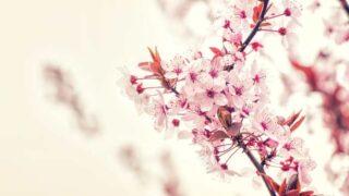 小説「葉桜の季節に君を想うということ」ネタバレ感想